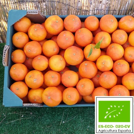 Mandarina Clementina Ecológica 15 Kg