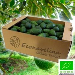 Aguacate Criollo Ecológico 10 Kg